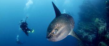 Mola Nusa Penida