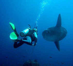 Mola Bali Penida Crystal Bay