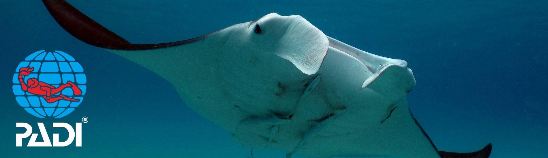 The Manta Underwater Room Rates